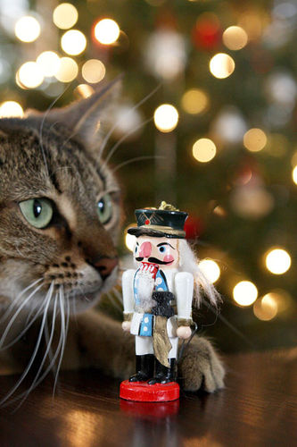 Nutcracker-cat