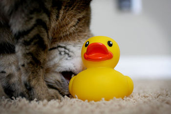 Poor-duck
