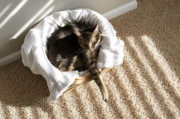 Sunny-cat6