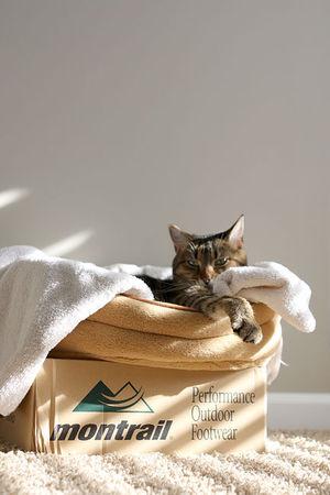 Sunny-cat2