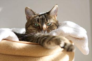 Sunny-cat5