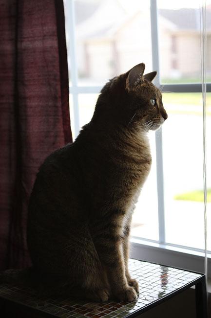 Statue-kitty