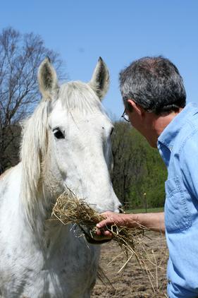 Horse_dad