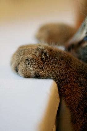 Roxycat