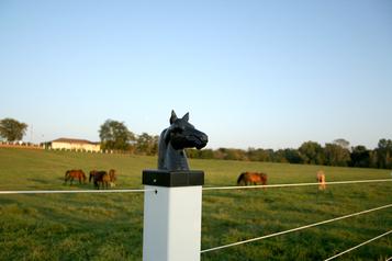 Horses_2
